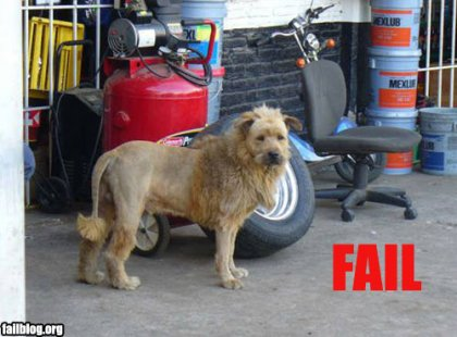 fail-owned-lion-fail